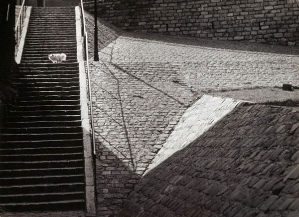 Brassaï dog on the stairs. in 1932