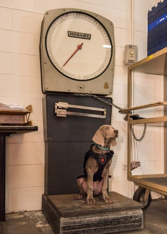 The Sweetest Museum Personnel: The Riley Dog Guard Art