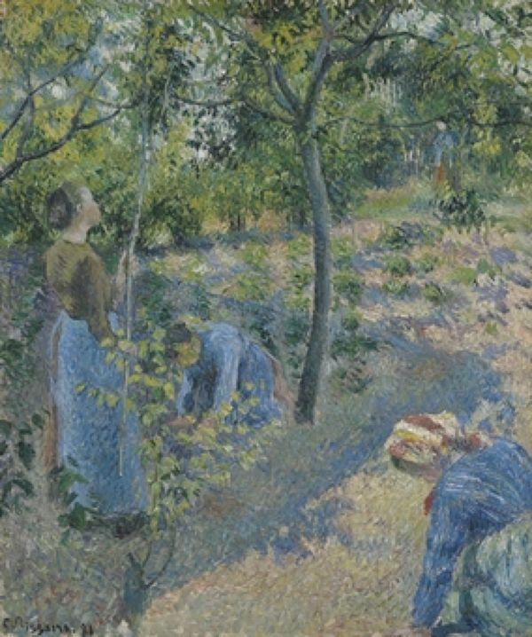 Камилль Писсарро «Сбор яблок» (1881)