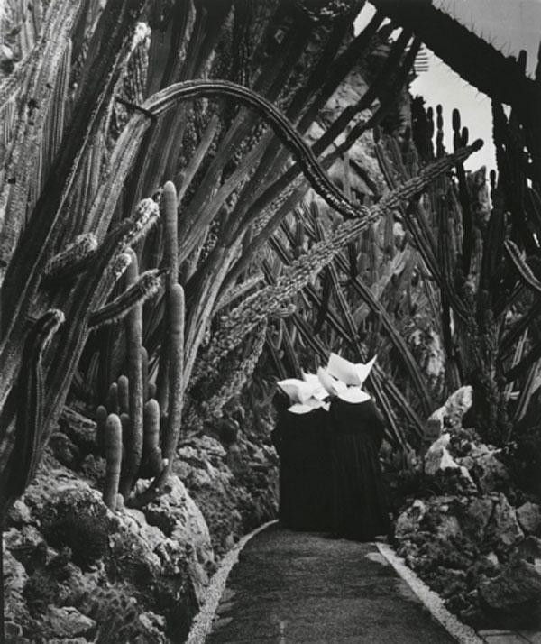 БРАССАЙ Экзотический сад в Монако. 1945