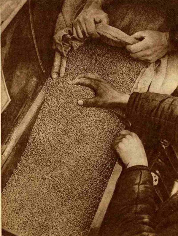 РОМАН КАРМЕН Заправка зерна в сеялку