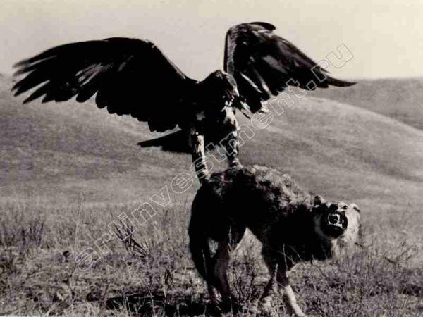 МАКС АЛЬПЕРТ Беркут охотится. 1926