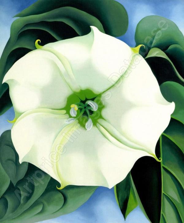 1. ДЖОРДЖИА О'КИФ Дурман / Белый цветок № 1. 1932